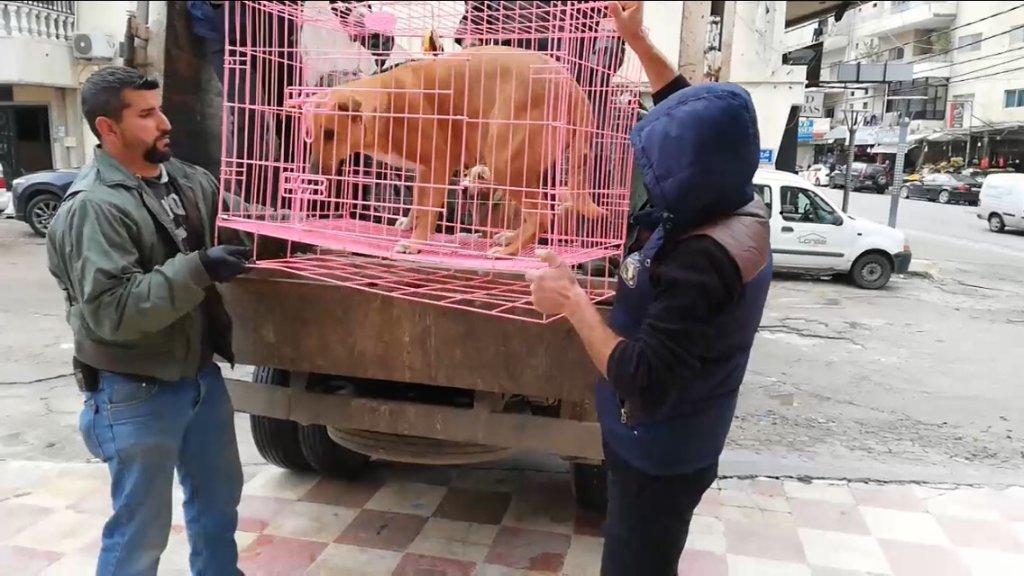 بعد ازدياد الهجمات على السكان...اطلاق حملة لمعالجة مشكلة الكلاب الشاردة في صور