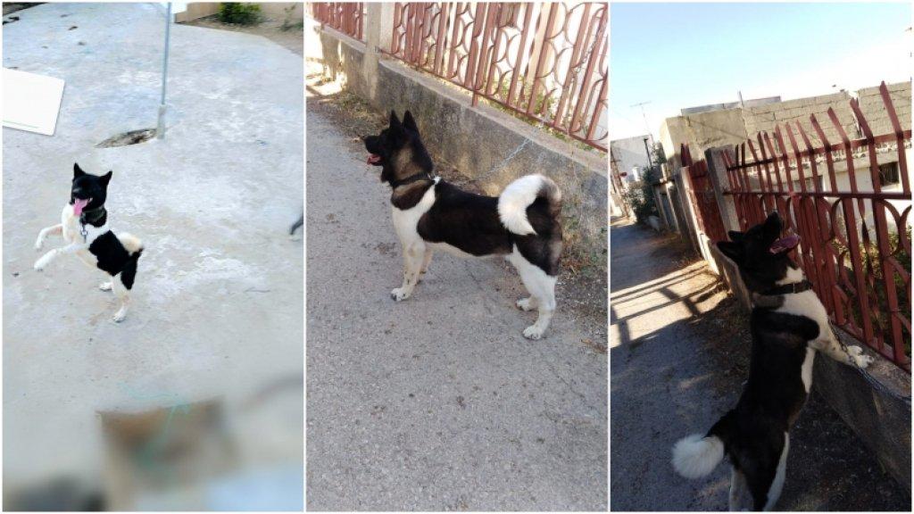 """الكلبة """"كيرا"""" خرجت من منزل أصحابها في مدينة بنت جبيل ولم تعد.. لمن شاهدها الاتصال على هذا الرقم"""