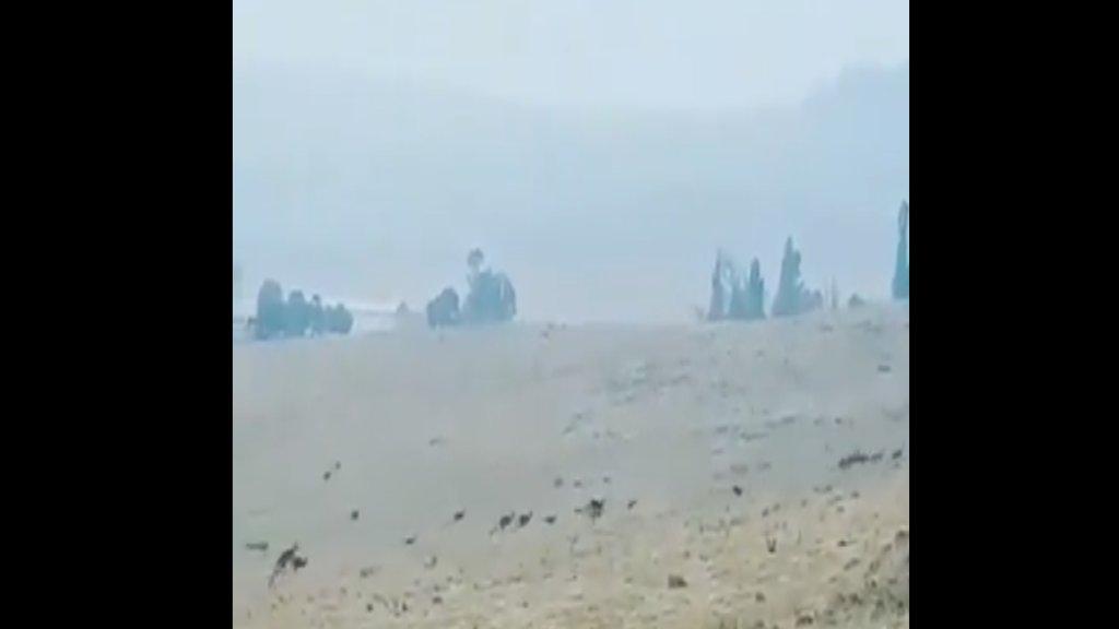 بالفيديو/ هروب جماعي لحيوانات الكانغر من الحرائق المشتعلة في الغابات في أستراليا