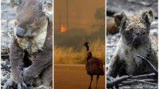 بالصور/ مشاهد مؤلمة لمئات الحيوانات التي تفحمت جراء حرائق أستراليا الكارثية