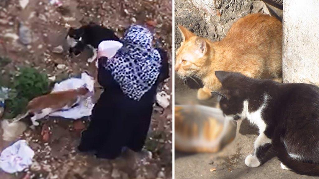 """بالفيديو/ سيدة تنثر """"الرحمة"""" رفقاً بالحيوان وتجول مسافات في الضاحية لتطعم القطط في الشوارع!"""