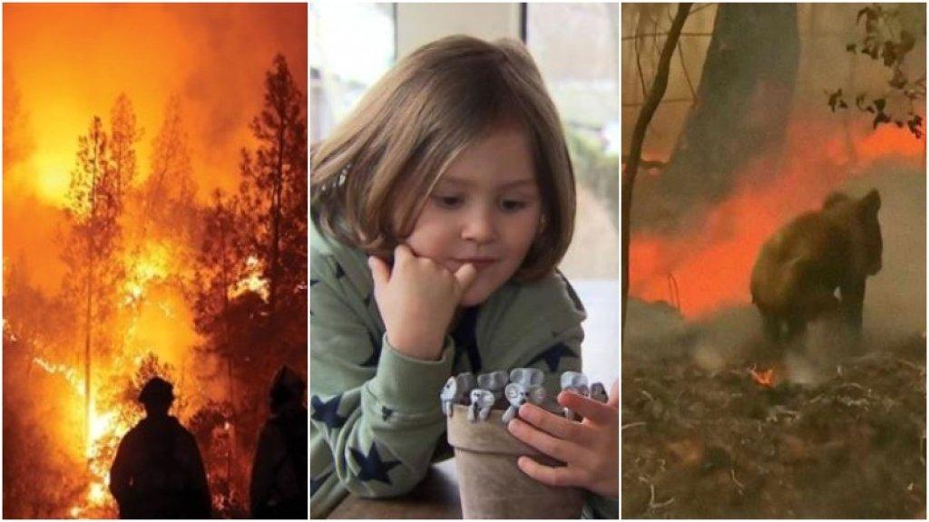 بالفيديو/ طفل في الـ6 من عمره ينجح بجمع 100 ألف دولار من أجل حرائق أستراليا