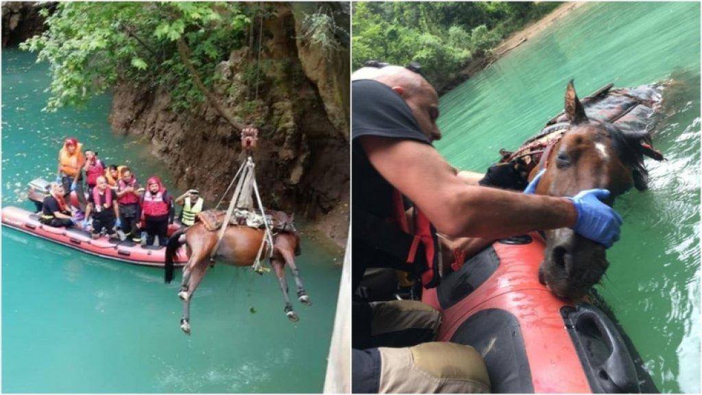 بالصور والفيديو/ انتشال حصان نافق طفا على وجه المياه في سد شوان- كسروان
