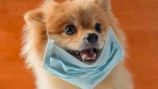 الأردن يعلن إصابة أول كلب بفيروس كورونا