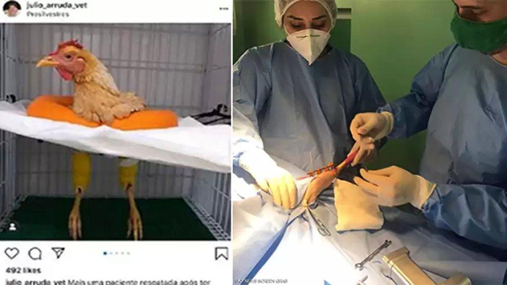 بالصور/ بعدما ضجت مواقع التواصل الإجتماعي بخبر إنقاذ طبيب بيطري مصري لدجاجة بعملية جراحية، طبيب برازيلي يفضح الخدعة!
