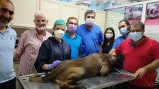 أول عملية فريدة من نوعها في لبنان...زراعة أسنان لكلب!