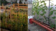 مع الارتفاع الصاروخي للأسعار...أسطح وشرفات منازل اللبنانيين تحولت إلى مساحات زراعية والأزمة أنتجت موجة جديدة من المزارعين اللبنانيين الشباب!