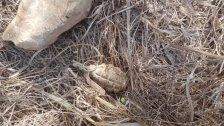العثور على قنبلة يدوية غير منفجرة بين المنازل في بلدة الخيام بالقرب من المعتقل من مخلفات الإحتلال الإسرائيلي
