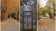 صور ساحرة من اللقلوق...الخريف بأبهى حلله