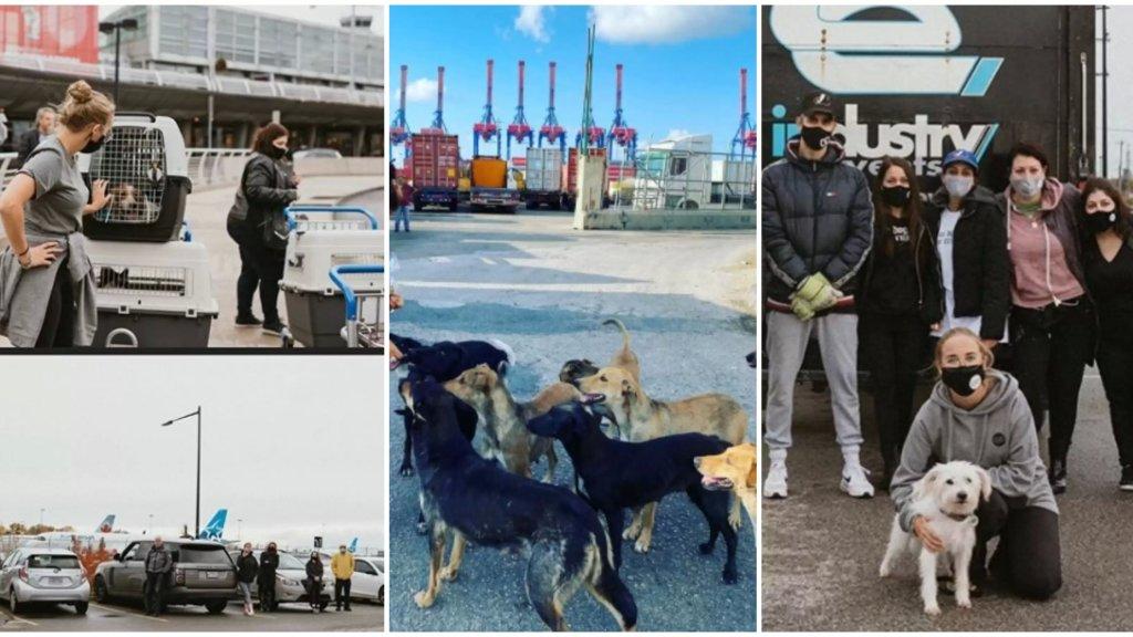بعض الكلاب التي شردت جرّاء إنفجار المرفأ تركت بيروت ورحلت إلى مونتريال...جمعية أنقذتهم وتم تبنيهم من قبل سكان هناك!