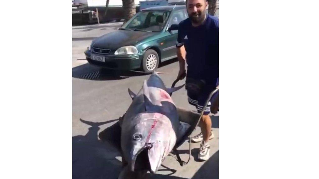 """إصطياد سمكة عملاقة نادرة من نوع """"تونا"""" يتراوح وزنها بين 200 و 220 كيلوغراماً في بحر صور"""