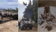 """بعد الصور التي أثارت استياءً كبيراً لدى الرأي العام... مرتكبو جرم مخالفة قانون الصيد بحق طيور """"الرهو"""" المهاجرة والمحظّر صيدها دوليا وقعوا في قبضة """"فصيلة صور"""""""
