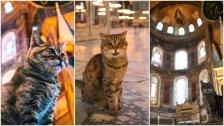 """بالصور/ """"غلي"""".. قطة مسجد """"آيا صوفيا"""" التاريخي الشهيرة فارقت الحياة"""