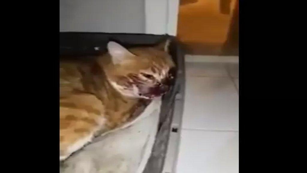 """بالفيديو/ جريمة بحق الحيوان في اهدن...أطلق النار على قطة: """"كان من بيته عم يتسلى""""!"""