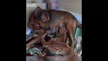 بالفيديو/ في بنت جبيل.. كلبة تتبنى قطط صغار وترضعهم من حليبها بعد ان غابت الام !! الرحمة في فطرتها