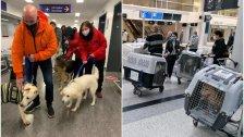 بالصور/ إنقاذ 9 كلاب في لبنان وتأمين سفرهم إلى كندا ليتم تبنّيهم