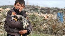 """بعدما شغل جيش الإحتلال بـ""""دجاجته"""".. عائلة تقرر منح الطفل حسين شرتوني """"بقرة ألمانية"""" مؤصلة لإنتاج الحليب"""
