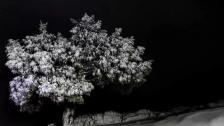 المنخفض الجوي البارد مستمر... الطقس غدا عاصف والثلوج على ارتفاع 1100 متر و موج البحر يرتفع الى 5 امتار
