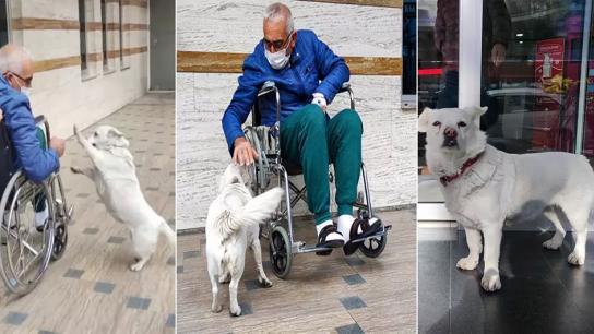 بالفيديو/ نُقل إلى المستشفى فتبعت الكلبة سيارة الإسعاف وانتظرت صاحبها المريض أمام المستشفى 6 أيام!