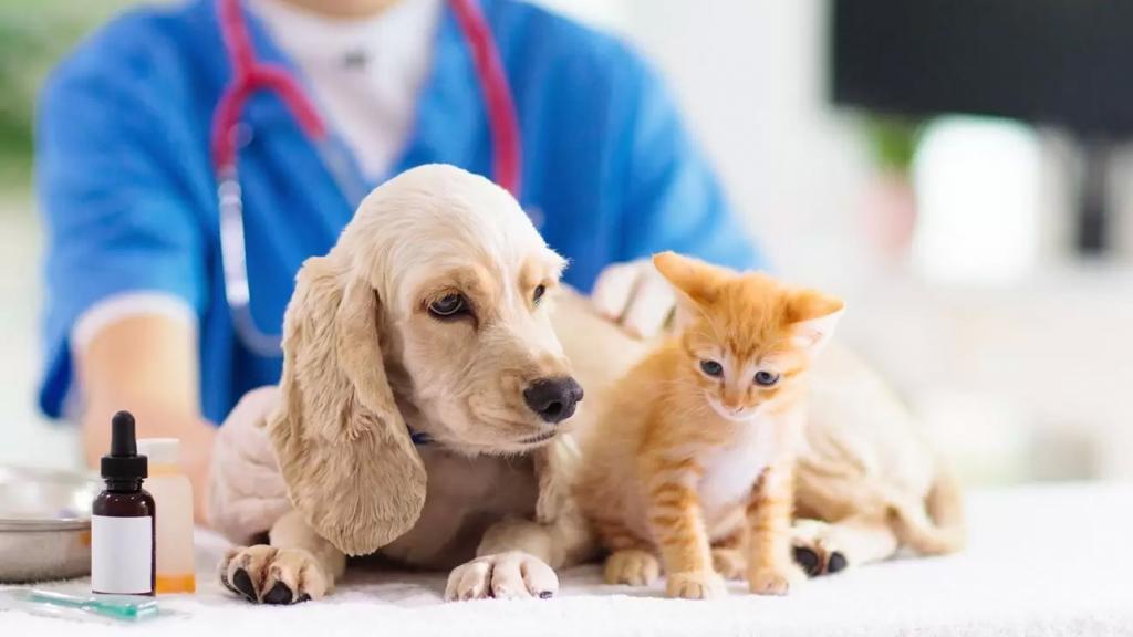 باحثون بريطانيون: لضرورة توفير لقاح مضاد لفيروس (كورونا) للقطط والكلاب
