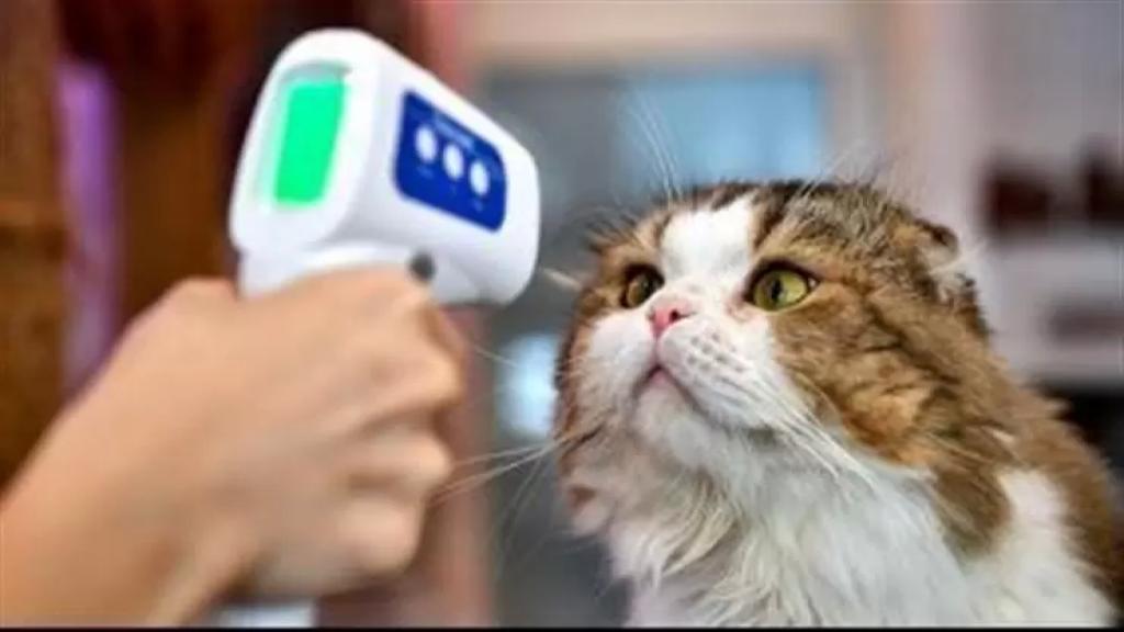 بدء إختبارات كورونا للقطط والكلاب التي ظهرت عليها الأعراض ولامست مصابين في كوريا الجنوبية