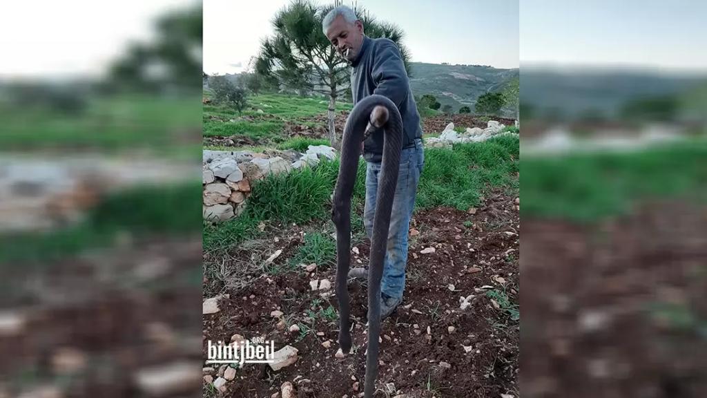 بالصورة/ المواطن حيدر شبلي يتخلص من أفعى معمرة في عز شباط!