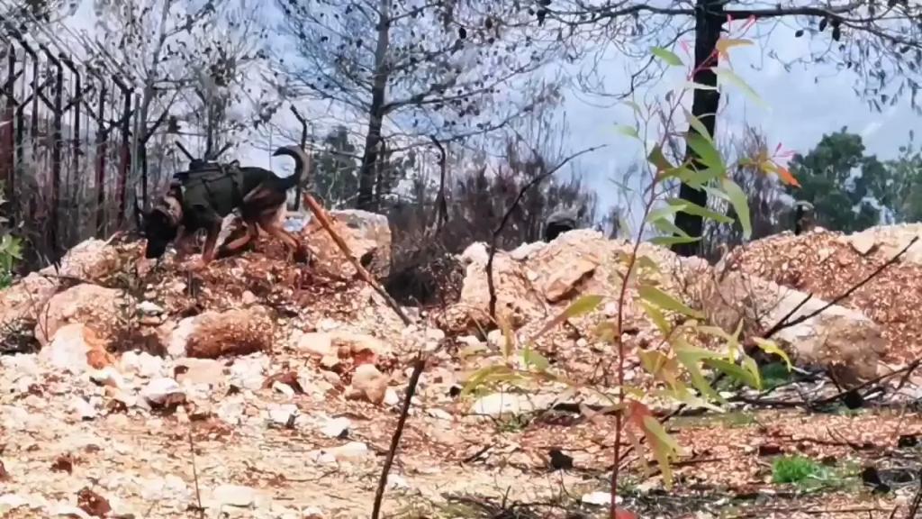 """بالفيديو/ الاحتلال """"الاسرائيلي"""" اطلق 3 كلاب بوليسية في محيط مستعمرة مسكاف عام"""