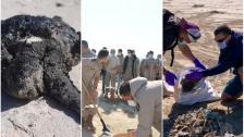 2 طن من القطران على الشواطىء الجنوبية.. عز الدين: نأمل إتمام عمليّة التنظيف خلال 15 يومًا