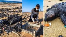 الكارثة كبيرة وما خفي اعظم.. التلوث النفطي جنوباً والتكتم الاسرائيلي.. هل التسرب بسبب الحفر والتنقيب السري عن النفط ؟