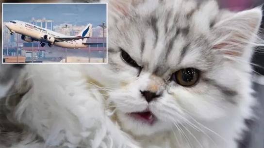 قطة تُجبر طائرة سودانية متوجهة نحو قطر على الهبوط الإضطراري بعد دخولها لقمرة الطيارين ومهاجمة الطاقم!