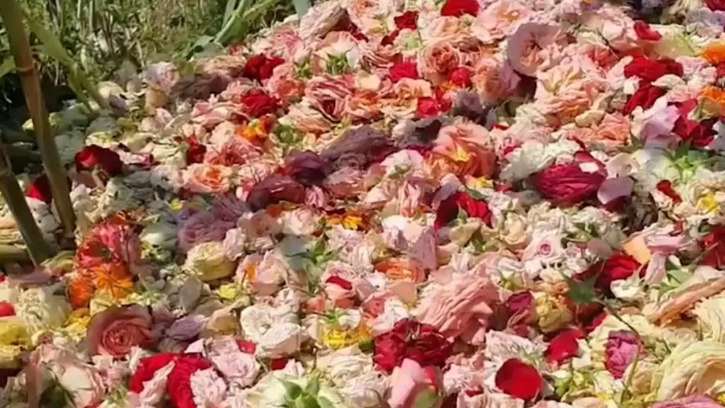 """بالفيديو/ في عيد الأم """"يا ورد مين يشتريك""""... ملايين الزهور تُرمى بسبب قلة البيع"""