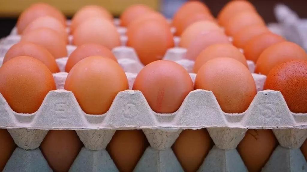 """""""خلوها تفقس"""": حملة لمقاطعة شراء البيض بعدما وصل سعر الكرتونة الى 40 الف ليرة"""