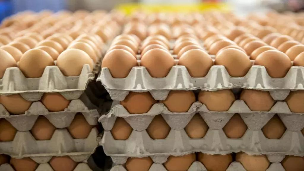سعر البيض ينخفض بعد مقاطعته.. هذا ثمن الكرتونة!