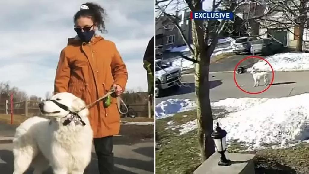 بالفيديو/ كلبة مخلصة توقف السير لطلب المساعدة وإنقاذ صاحبتها بعد تعرضها لنوبة في الشارع
