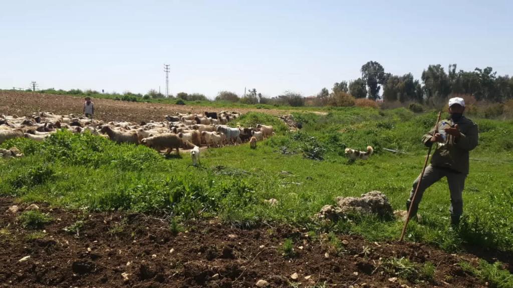 قوات الاحتلال تطلق النار على رعاة الماشية في سهل الخيام (NBN)