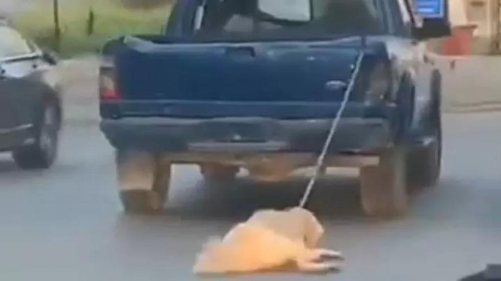 بالفيديو/ شاحنة تجر كلب في أحد الشوارع في لبنان!