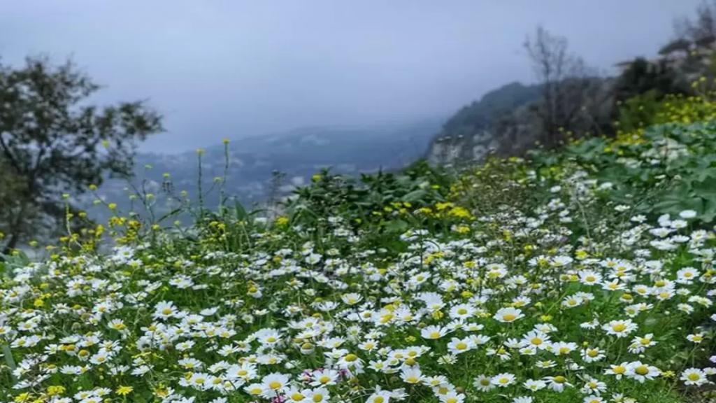 الطقس الدافئ يودعنا.. أمطار ورياح وثلوج تقترب من لبنان!