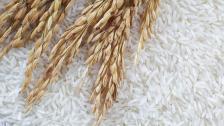 خمسة آلاف طن من الأرز.. هبة من البرازيل تصل إلى لبنان في آب المقبل