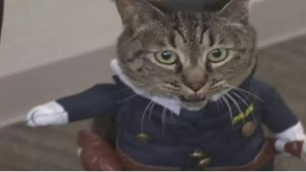 """بالفيديو/ تكريماً لدورها في إنقاذ شخص...تعيين القطة """"كوكو"""" مديرة لأحد أقسام الشرطة في محافظة توياما اليابانية"""