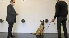 الكلاب المدربة على رصد كورونا سلاح طبيب لبناني لمكافحة الجائحة: مسحات PCR لها هامش خطأ يصل إلى 30%  أما مع الكلاب فلا يتخطى 5%