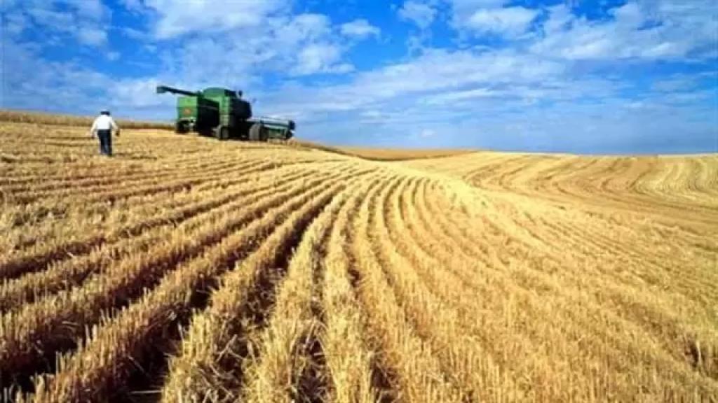 وزارة الإقتصاد: القمح المنتج محليًا هو من الصنف القاسي ولا يصلح للإستعمال لإنتاج الخبز اللبناني