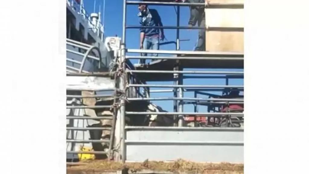 بالفيديو/ الجديد: وصول باخرة محملة بالأبقار المدعومة لصالح شركة ذيب نخلة التي ترفض تسليم التجار وموزعي اللحوم