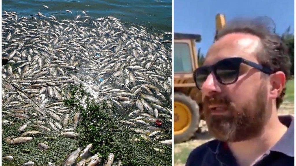 """بالفيديو/ مدير عام مصلحة الليطاني يكشف عن """"فضيحة"""" كبيرة: 7 طن من الأسماك النافقة في بحيرة القرعون تحولت الى السوق وتم بيعها للمواطنين بالأيام الماضية"""