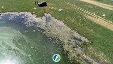 بالصور/ مشاهد كارثية للأسماك النافقة في بحيرة القرعون!