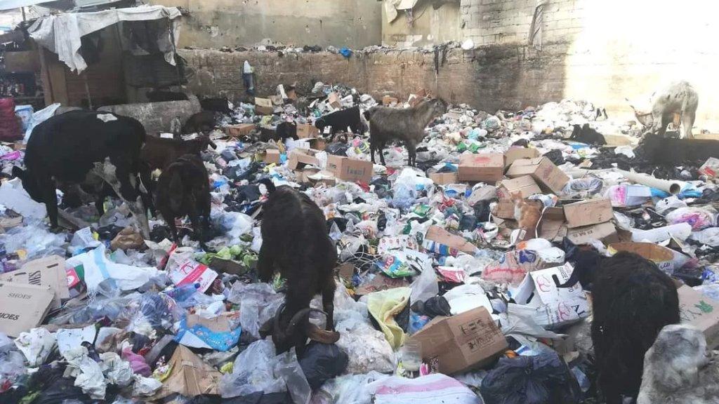 """في لبنان فقط...الماعز يأكل النفايات بدلاً من """"الحشيش""""!"""