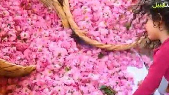 بالفيديو/ قصرنبا، جنة الورد في لبنان.. ومهرجان القطاف والتقطير والمربيات قد بدأ!