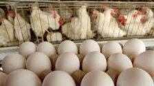 بعد اللحوم.. الدجاج والبيض للميسورين فقط في لبنان!