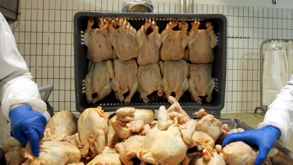 """في ظل الأزمة... """"مواطنون يشترون من بائعي الدجاج """"رقاب الدجاج"""" للاستهلاك لانها شبه مجانية"""""""