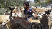 """""""بعت روحي"""".. بسبب الأزمة الاقتصادية، لبنانيون يتخلون عن حيواناتهم الأليفة!"""