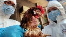 """الصين ترصد تفشي إنفلونزا الطيور """"إتش 5 إن 8"""" في التبت"""
